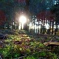 #przyroda #las #grzyby #kolorki #jesień #otoczenie